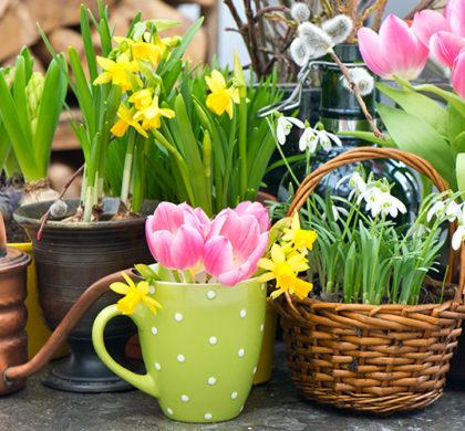 A Acupuntura e a primavera